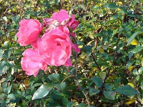 floraison en automne