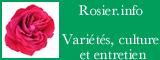 Découvrez le rosier, histoire, variétés, culture, entretien, taille, maladies, forum...